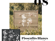 08_-_pissenlits_blancs