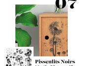 07_-_pissenlits_noirs