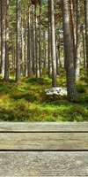 ARTECH BOIS, Construction de terrasse en bois à Cassis