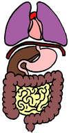 systeme digestif et respiratoire