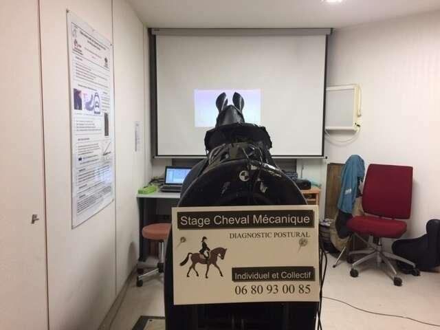 Analyse cinétique et cinématique de la posture du cavalier à cheval