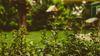 GB Jardins, Élagage et Abattage à Haubourdin