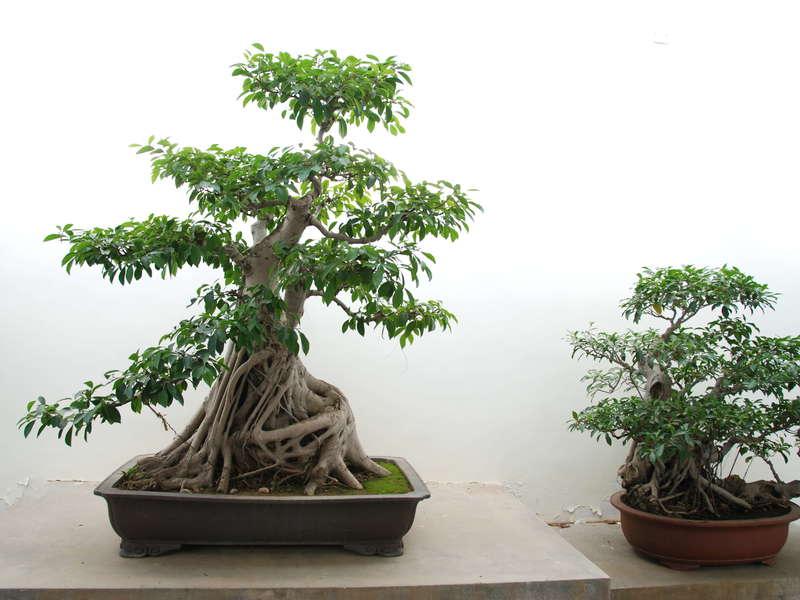 shanghai_jardin_botanique__musee_et_musee_mtc__3_