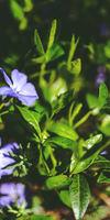 Jardinier Par Nature, Jardinage à Vendôme
