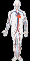 sang organe