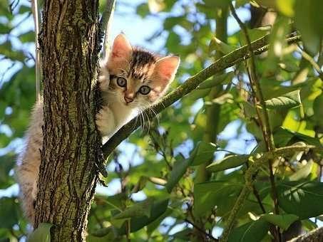 cat-1647775__340