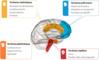 Cerveau hypnose