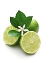 Hypnose citron vert 2