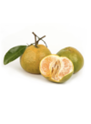 Hypnose mandarine verte 2