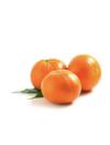 Hypnose tangerine 2