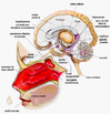 Hypnose aromachologie