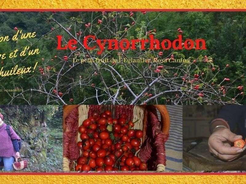 le_cynorrhodon