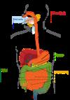 Magalie quinti ostéopathe monaco, beausoleil, cap d'ail
