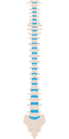 Ostéopathe monaco