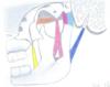 ostéopathe oral