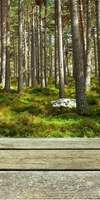 Paysage et Jardin de Loire, Construction de terrasse en bois à Ancenis