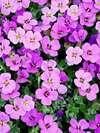 Fleures créateur d'espaces verts