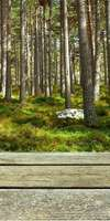 Esprit Usage Bois, Construction de terrasse en bois à Basse-Goulaine