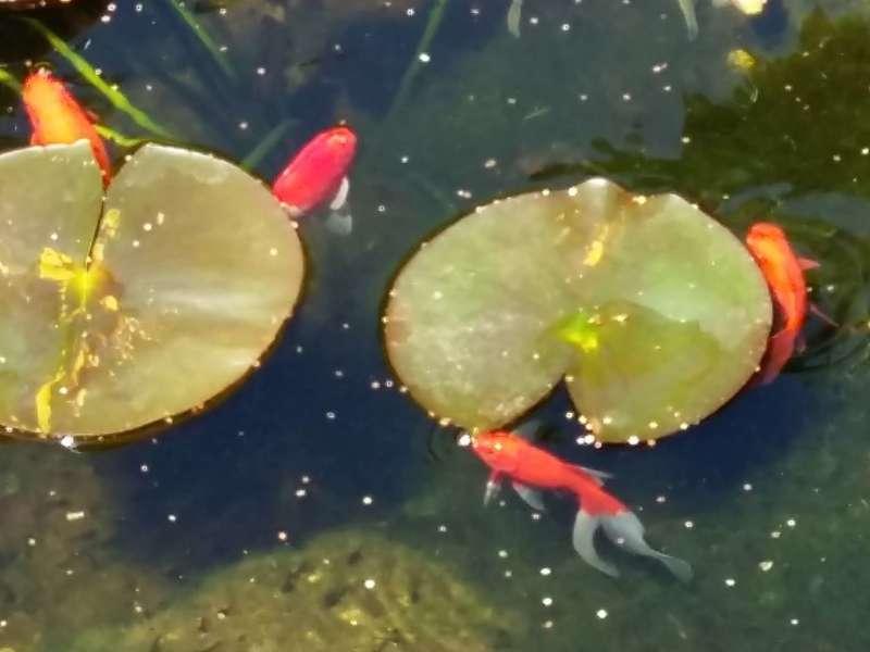 Bassin d'ornement. Simiane-Collongue