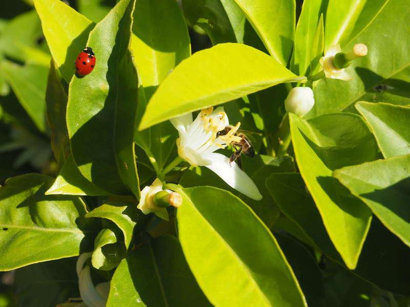 Biodiversité. Jardin Saint Chamas