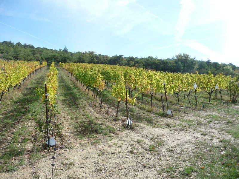 1,7 hectares de raisin bio