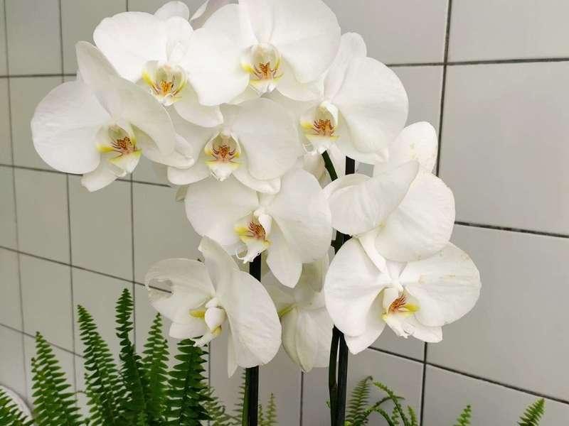 Ce sont de vraies orchidées !