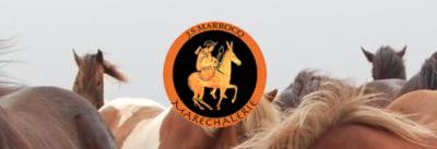 J'ai toujours travaillé pour optimiser le confort du cheval. Le pied nu est une pratique en parfaite adéquation avec ce principe. Mon but, c'est de respecter les besoins physiologiques de l'animal et c'est en faisant un parage adapté à chaque individu que j'arrive à l'atteindre.