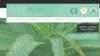 exemple site internet gyslaine-vial-reflexologue