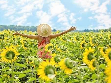 sunflowers-3640938__340