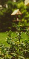 SARL NATURE ET CREATION, Création et aménagement de jardins à Bressuire