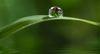 Catherine Lefresne : définitions de la naturopathie