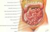 le ventre l'abdomen, le mésentère ostéopathe à Nandy 77 seine et marne proche savigny le temple
