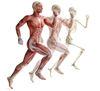 L'ostéopathie du sport : biomécanique, l'anatomie et la physiologie du corps humain