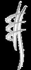 osteopathe chiropracteur et étiopathe quelles différences