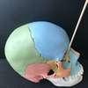 anatomie crâne canal lacrymal bouché ostéopathe à Nandy proche melun