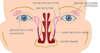 anatomie du canal lacrymal pour canal lacrymal bouché chez bébé