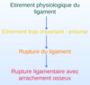 pathologies ligamentaires entorse arrachement osteopathe du sport nandy