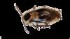 supprimer les blattes à Paris