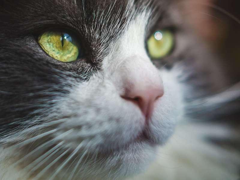 cat-eyes-photo