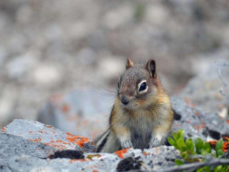 sitting-squirrel