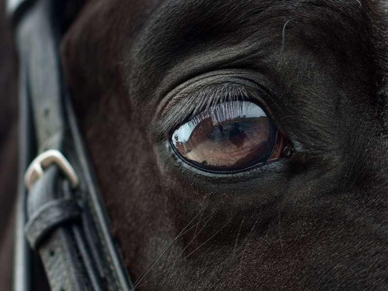 horse-2112196_1920