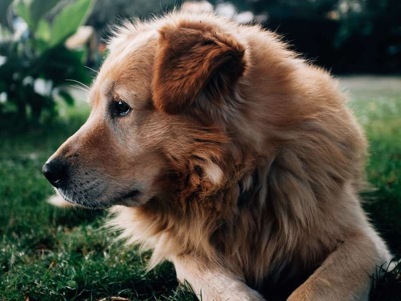 profile-of-dog-on-grass
