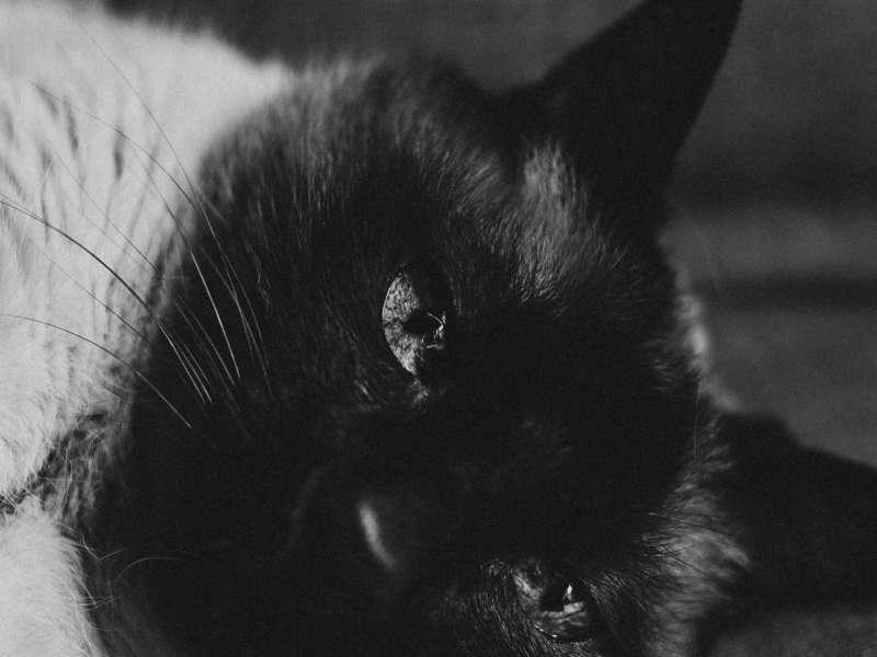 relax-y-cat