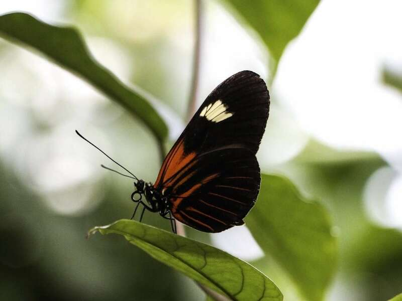 orange-and-black-butterfly-on-branch
