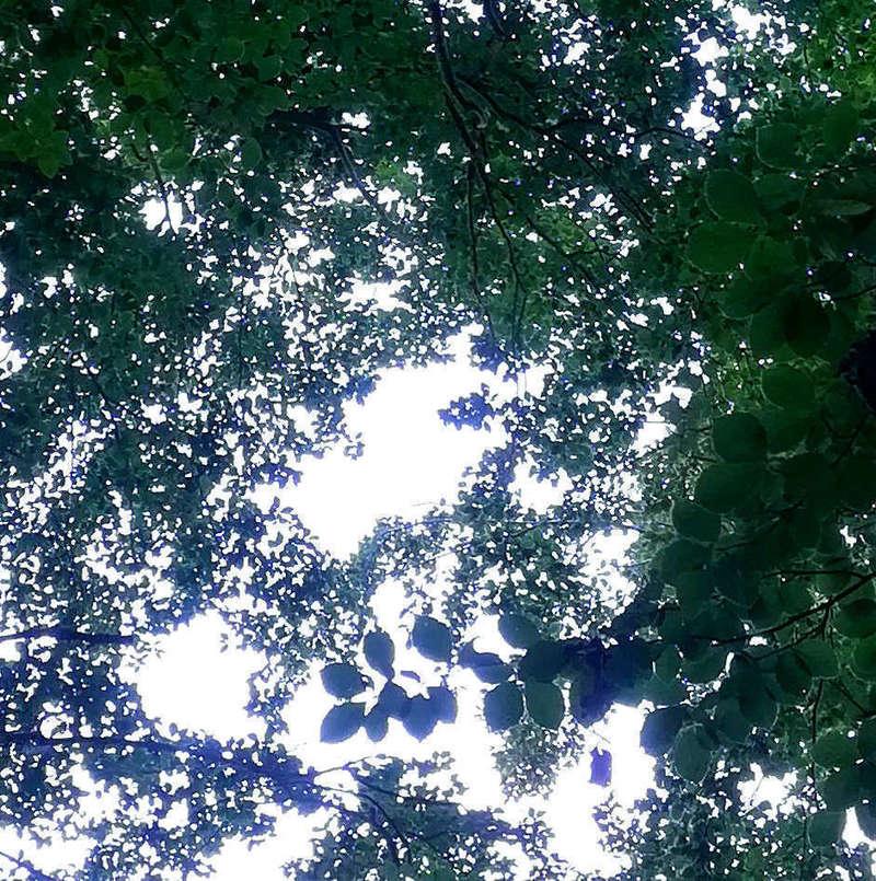tete_arbre