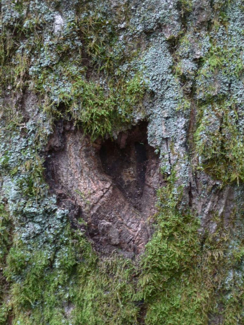 coeur_arbre1