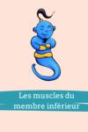fiches anatomie muscles du membre inférieur