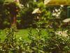 C&G ENTRETIEN, jardinier à Vauréal (95490)