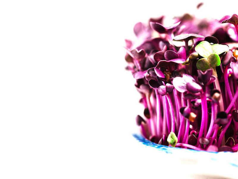 germination_violette_90_