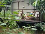 hotel-udalawalawe-3-e1542634483745-150x150